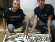 Capitanerie di Porto – Gioia Tauro obbiettivo: Tutela del consumatore finale