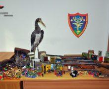 Reggio, sequestrate armi, munizioni, polvere da sparo ed un esemplare imbalsamato di fauna particolarmente protetta. Una persona denunciata.
