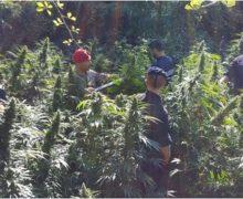 Locri, focus Ndrangheta: 3 persone arrestate 1 denunciata e 1 piantagione di canapa rinvenuta