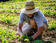La sentenza contro Monsanto