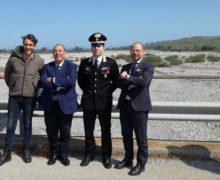 Reggio, continua l'impegno del Prefetto contro i bovini vaganti