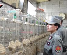 Reggio Calabria: Carabinieri smantellano organizzazione dedita al traffico di specie animali protette VIDEO