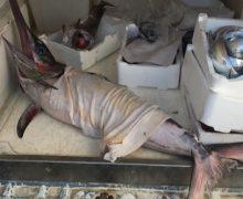 Gioia Tauro, sequestro di 100 Kg di pescato