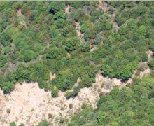 Locri, scoperte 3 piantagioni di canapa indiana