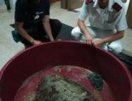 San Ferdinando, Salvata tartaruga marina ferita caretta caretta