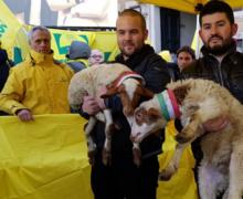 Coldiretti: Sos pastori, domani a Reggio Calabria arriva il primo Pecorino Day