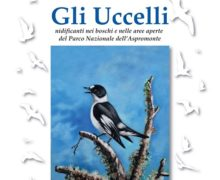 Parco dell'Aspromonte, nuova pubblicazione scientifica sugli Uccelli nidificanti