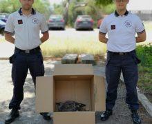 Gioia Tauro, salvato un esemplare di Albatros