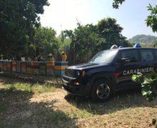 Sei apicoltori denunciati dai Carabinieri forestali