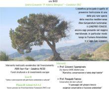 Un seminario per la tutela del Ginepro Fenicio