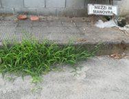 Riceviamo e pubblichiamo. Segnalazione interventi urgenti area 167 Via San Pio da Pietralcina, quando le false promesse del sindaco hanno le gambe corte.