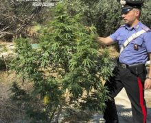 Siderno, un arresto per coltivazione di sostanze stupefacenti