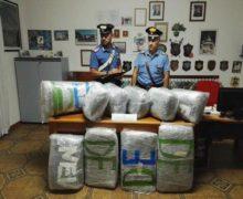 Su furgone con 55 kg marijuana,arrestato