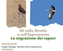 """La migrazione degli uccelli rapaci agli """"Incontri di natura"""" del Parco"""