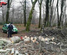 Tagliava legna all'interno del Parco Aspromonte. Deferito