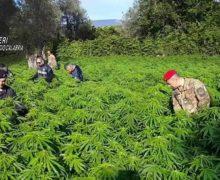 Coltivava marijuana a San Giovanni di Gerace. Arrestato