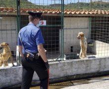 Sant'ilario dello jonio: i carabinieri sequestrano un canile irregolare