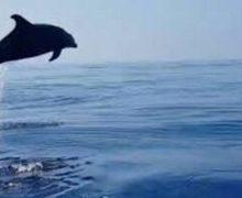 San Ferdinando, salvato Delfino spiaggiato