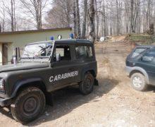 Bagaladi (RC) – Una squadra di 5 persone, attrezzata di camion con rimorchio e trattore, sorpresa a razziare piante di leccio in un bosco privato. Arrestati.