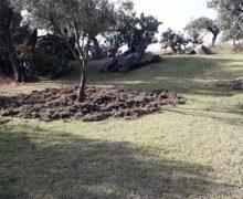 Coldiretti: i cinghiali invadono anche la Casa di Spiritualità Nazareth a Staletti