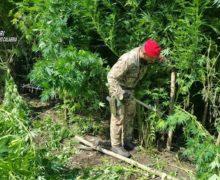 Villa San Giovanni: Ancora importanti risultati nella lotta alla produzione di stupefacente