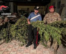 Gioia Tauro: Ancora arresti per produzione di stupefacente, sequestrato un essiccatoio