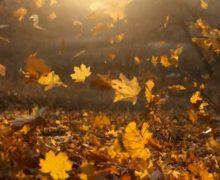 Riflessioni sull'autunno di Caterina Sorbara