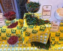 Coldiretti: la Calabria prima in Italia per numero di aziende biologiche e terza per superficie. I NUMERI