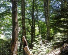 Parco Aspromonte: faggeta vetusta di Valle Infernale è stata iscritta tra i patrimoni mondiali dell'Umanità Unesco